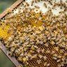 【池上蜂農】池上樂蜂場